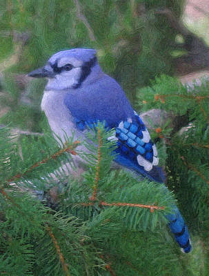 Bluejay Digital Art - Painted Blue Jay  by Thomas  MacPherson Jr