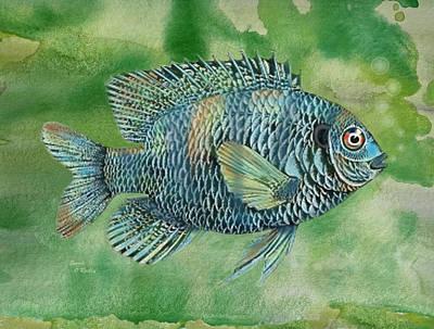 Bluegills Painting - Painted Bluegill Fish by Sandi OReilly
