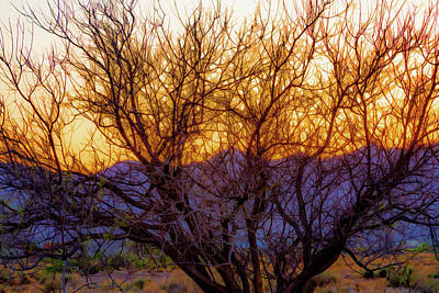 Digital Art - Painted Branches Of A Desert Tree At Sunset by Bonnie Follett