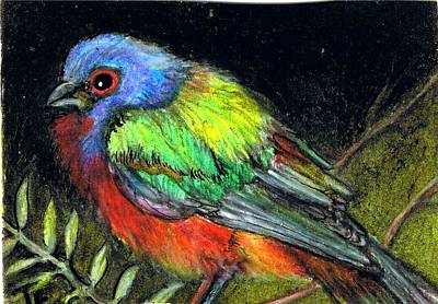 Bunting Drawing - Painted Bunting Colors by Terri Kilpatrick