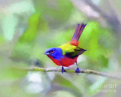 Photograph - Painted Bunting by Kerri Farley