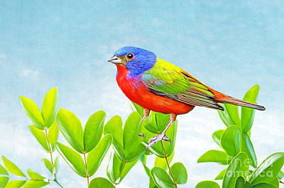 Bunting Wall Art - Photograph - Painted Bunting by Laura D Young