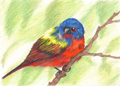Bunting Drawing - Painted Bunting by Patricia R Moore