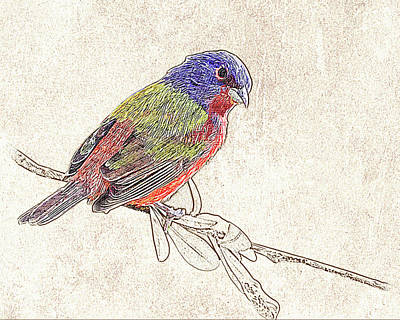 Photograph - Painted Bunting Photographic Drawing by Dawn Currie