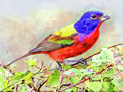 Bunting Mixed Media - Painted Bunting's Incredible Colors by Dave Lee