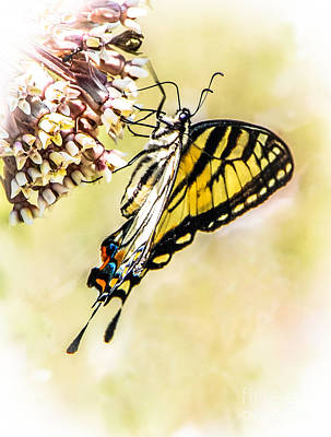 Photograph - Painted Butterfly by Grace Grogan