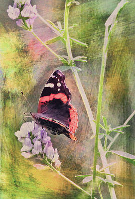 Painted Butterfly Art Print by James Steele