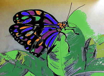 Drawing - Painted Butterfly by Kimmary I MacLean