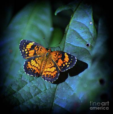 Abstract Digital Photograph - Painted Butterfly by Skip Willits