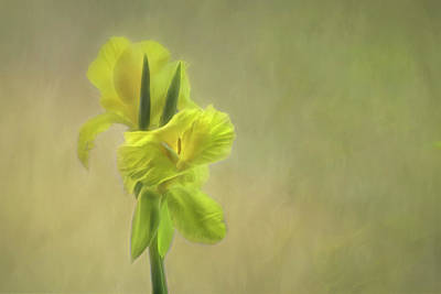 Photograph - Painted Canna by Carol Eade