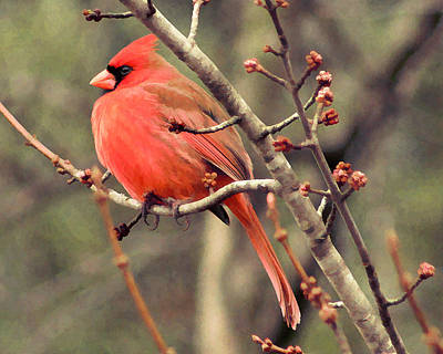 Photograph - Painted Cardinal by TnBackroadsPhotos