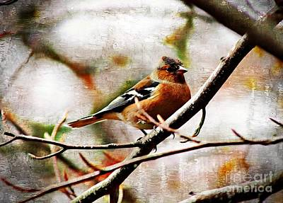Photograph - Painted Chaffinch by Clare Bevan