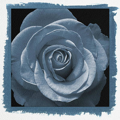 Photograph - Painted Cyanotype Blue Rose by Aimee L Maher Photography and Art Visit ALMGallerydotcom