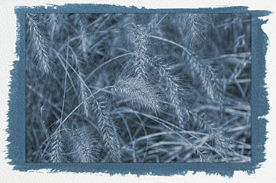 Photograph - Painted Cyanotype Golden Wheat by Aimee L Maher Photography and Art Visit ALMGallerydotcom