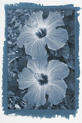 Photograph - Painted Cyanotype Hibiscus Blooms Vertical by Aimee L Maher ALM GALLERY