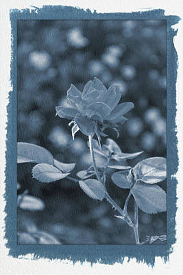 Photograph - Painted Cyanotype Knockout Rose Vertical by Aimee L Maher ALM GALLERY