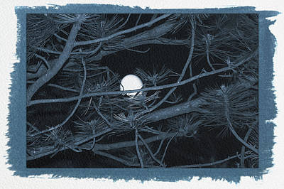 Photograph - Painted Cyanotype Moon Through Pines by Aimee L Maher Photography and Art Visit ALMGallerydotcom