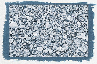 Photograph - Painted Cyanotype Ocean Shells by Aimee L Maher Photography and Art Visit ALMGallerydotcom