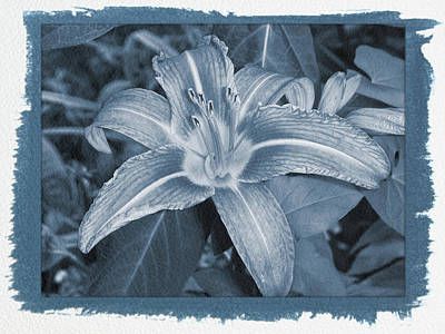 Photograph - Painted Cyanotype Orange Lily by Aimee L Maher Photography and Art Visit ALMGallerydotcom