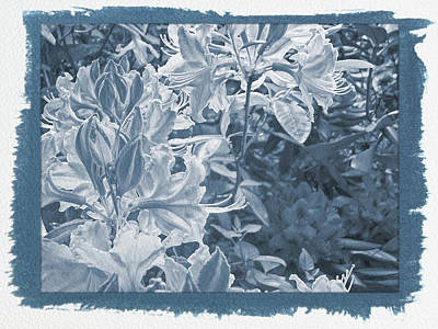 Photograph - Painted Cyanotype Orangeburst by Aimee L Maher Photography and Art Visit ALMGallerydotcom