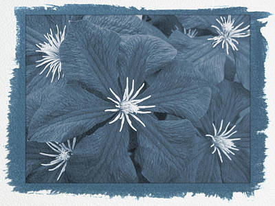 Photograph - Painted Cyanotype Passion by Aimee L Maher Photography and Art Visit ALMGallerydotcom