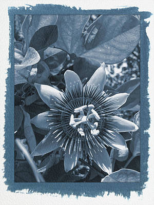 Photograph - Painted Cyanotype Passion Flower 1 by Aimee L Maher Photography and Art Visit ALMGallerydotcom