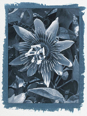 Photograph - Painted Cyanotype Passion Flower 4 by Aimee L Maher Photography and Art Visit ALMGallerydotcom