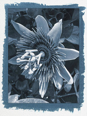 Photograph - Painted Cyanotype Passion Flower 5 by Aimee L Maher Photography and Art Visit ALMGallerydotcom