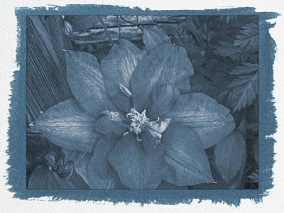 Photograph - Painted Cyanotype Passion Vine by Aimee L Maher Photography and Art Visit ALMGallerydotcom
