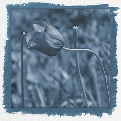 Photograph - Painted Cyanotype Pink Tulip by Aimee L Maher Photography and Art Visit ALMGallerydotcom