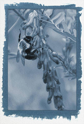 Photograph - Painted Cyanotype Pollination by Aimee L Maher ALM GALLERY
