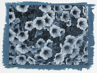 Photograph - Painted Cyanotype Purple Petunias by Aimee L Maher ALM GALLERY