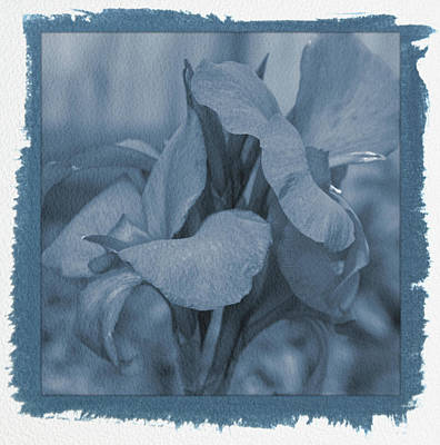 Photograph - Painted Cyanotype Red Canna Lily Floral by Aimee L Maher ALM GALLERY