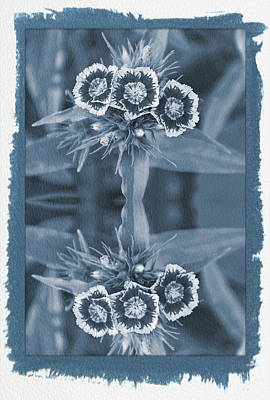 Photograph - Painted Cyanotype Reflections Of A Summer Bouquet by Aimee L Maher ALM GALLERY