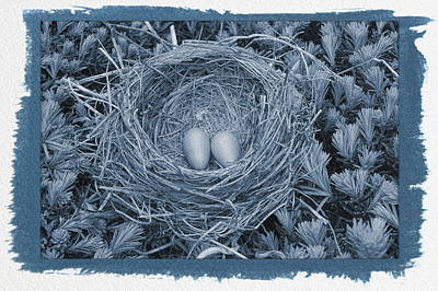 Photograph - Painted Cyanotype Robins Nest by Aimee L Maher ALM GALLERY