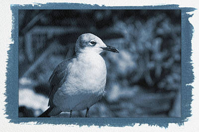 Photograph - Painted Cyanotype Seagull by Aimee L Maher ALM GALLERY