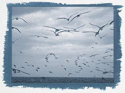 Photograph - Painted Cyanotype Seagull Flight by Aimee L Maher ALM GALLERY