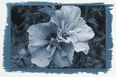 Photograph - Painted Cyanotype Summer Blossom by Aimee L Maher ALM GALLERY