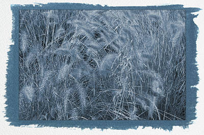 Photograph - Painted Cyanotype Summer Wheat by Aimee L Maher ALM GALLERY