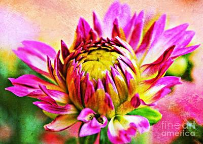 Painted Dahlia Art Print by Clare Bevan