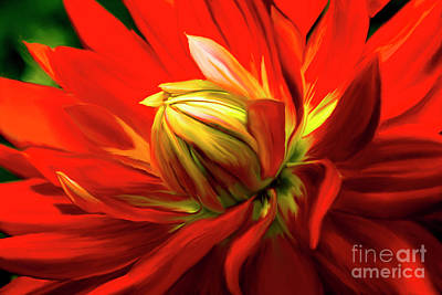Painting - Painted Dahlia In Full Bloom by Sherry Curry