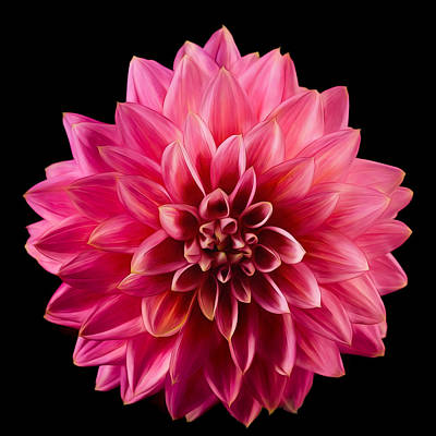 Photograph - Painted Dahlia by Mary Jo Allen