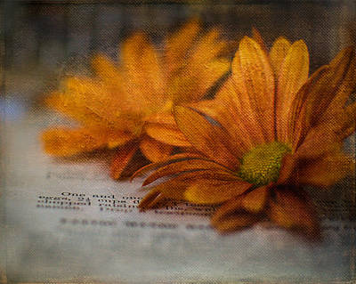 Cookbooks Digital Art - Painted Daisies by Barbara Marincel