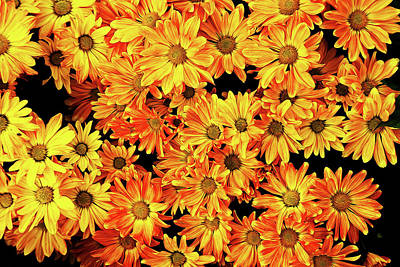 Photograph - Painted Daisies by Judy Vincent
