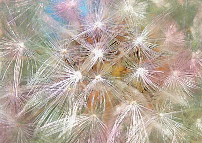 Dandelion Digital Art - Painted Dandelions by Hal Halli
