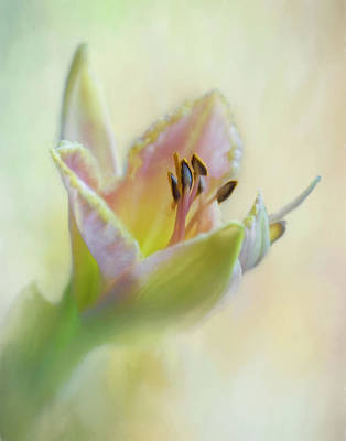 Photograph - Painted Daylily by David and Carol Kelly