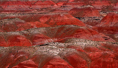Photograph - Painted Desert by Joe Kozlowski