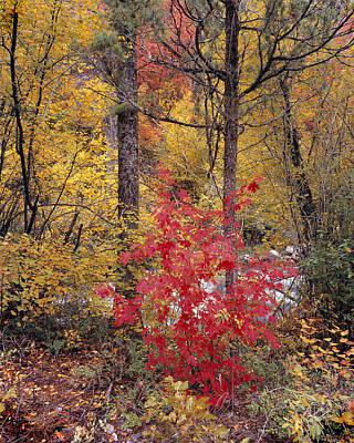 Painted Forest Art Print by Leland D Howard