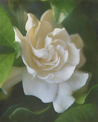 Digital Art - Painted Gardenia Blossom by Teresa Wilson
