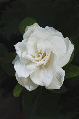 Art Print featuring the photograph Painted Gardenia by Phyllis Denton